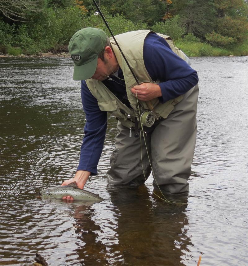 Fall Salmon