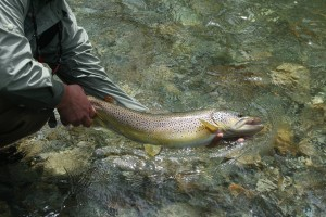 White River 26.5 brown